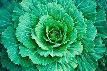Cabbage Leaves von agrofilms