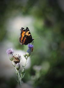 'Schmetterling' von Elke Balzen