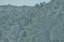 Woods1c