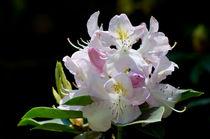 Erhabene Schönheit by lisa-glueck