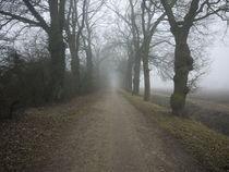 Eichenallee an einem nebeligen Wintermorgen von Elke Baschkar