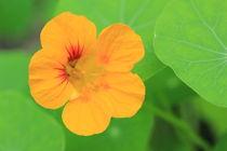 Gelb-grün von Silke Bicker