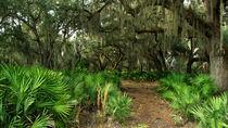 Oak Hammock. Split Oak Forest, Osceola County Florida. von chris kusik