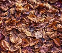 Herbstlaub von Oliver Kaschubs