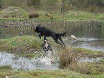 Rasante Jagd durchs Wasser von Elke Baschkar