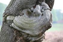 tree art by mark severn