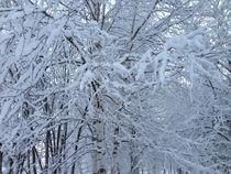 Russian winter with white birches.  von Tatyana Samarina
