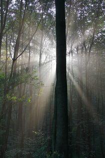 Morgens im Wald von Bernhard Kaiser