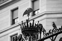 [barcelona] - ... bat & dove von meleah