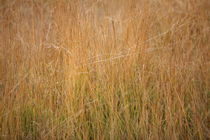 wild grasses by mark severn