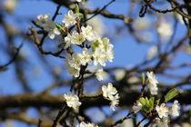 Zweig mit Blüten von visual-artnet