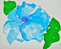 Hydrangea Bloom by Christine Chase Cooper