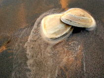 Sea Shells. von Tatyana Samarina