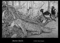 Monitor Lizard by Peter Grayson