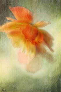 Flame von Annie Snel - van der Klok