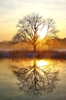 Baum nach Sonnenaufgang by Bernhard Kaiser