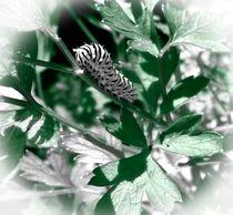 Macro Photograph Caterpillar by Maggie Vlazny