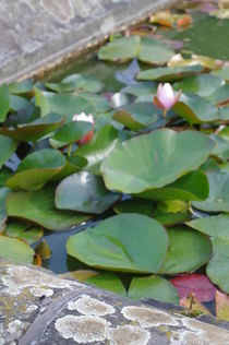 Aquatic plants by dag
