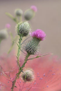 thistle by © Ivonne Wentzler