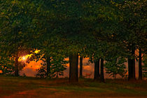 SUNSET THROUGH THE FOREST by tomyork