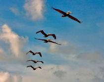 Cruising Pelicans. Brevard County, Florida. von chris kusik