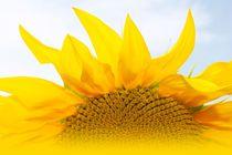 Sunshine of my life von M. Ziehr