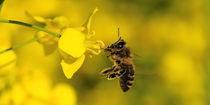 Biene von Jake Playmo