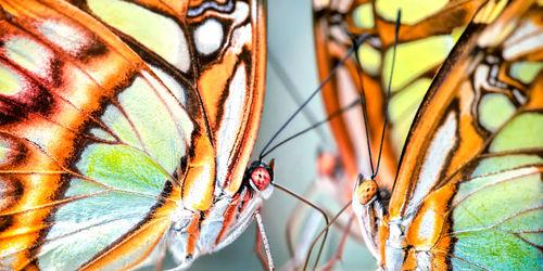 Dsc5236-butterfly-fight