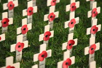 remembrance by mark severn