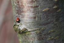 ladybird by mark severn