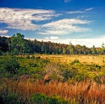 Autumn on the Florida Prairie. Osceola County Florida. von chris kusik
