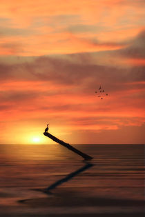 Cormorant-in-the-sunset