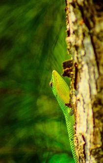 green skink by Ben Bürkle