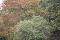 autumn colour by mark severn