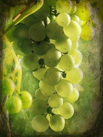 Bunch of yellow grapes von barbara orenya