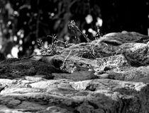 Dry Grass ~ Black & White von bebra