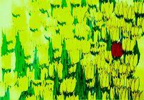 Ein Tulpenfeld für Marie von Peter Norden