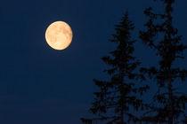 Moon over Fulufjället NP by Nicklas Wijkmark