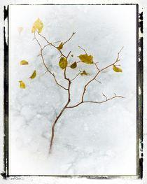 Frozen Leaves # 1 von arteralfo