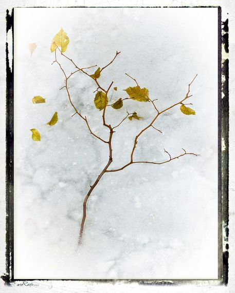 Frozen-leaves-number-1