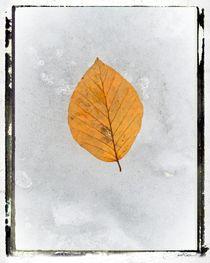 Frozen Leaves # 2 by arteralfo
