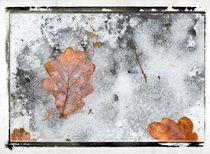 Frozen Leaves # 4 von arteralfo