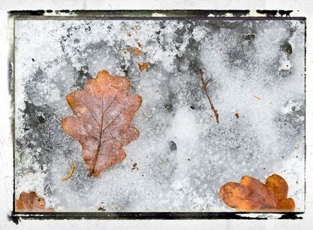 Frozen-leaves-number-4