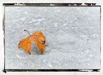Frozen Leaves # 5 by arteralfo