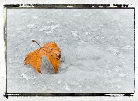 Frozen-leaves-number-5