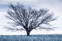 Mein Freund der Baum von tapinambur