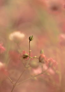 SOFT by © Ivonne Wentzler
