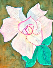 White Rose with Pink Edges by Christine Chase Cooper