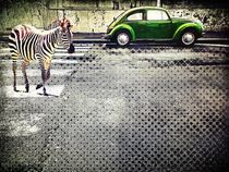 Zebras and beetles by Ale Di Gangi