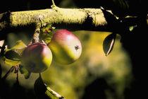 Baumobst  von Barbelotta  1